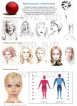 Światłocień i proporcje, tablica dydaktyczna, projektowanie fryzur, FRK.03